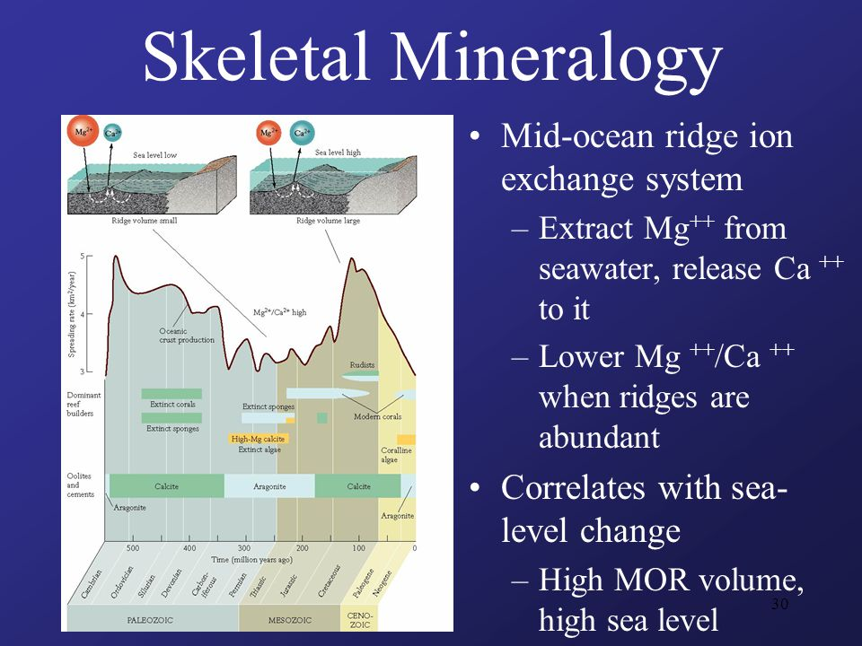 30 Mid-ocean ridge ion exchange system –Extract Mg ++ from seawater, release Ca ++ to it –Lower Mg ++ /Ca ++ when ridges are abundant Correlates with sea- level change –High MOR volume, high sea level Skeletal Mineralogy