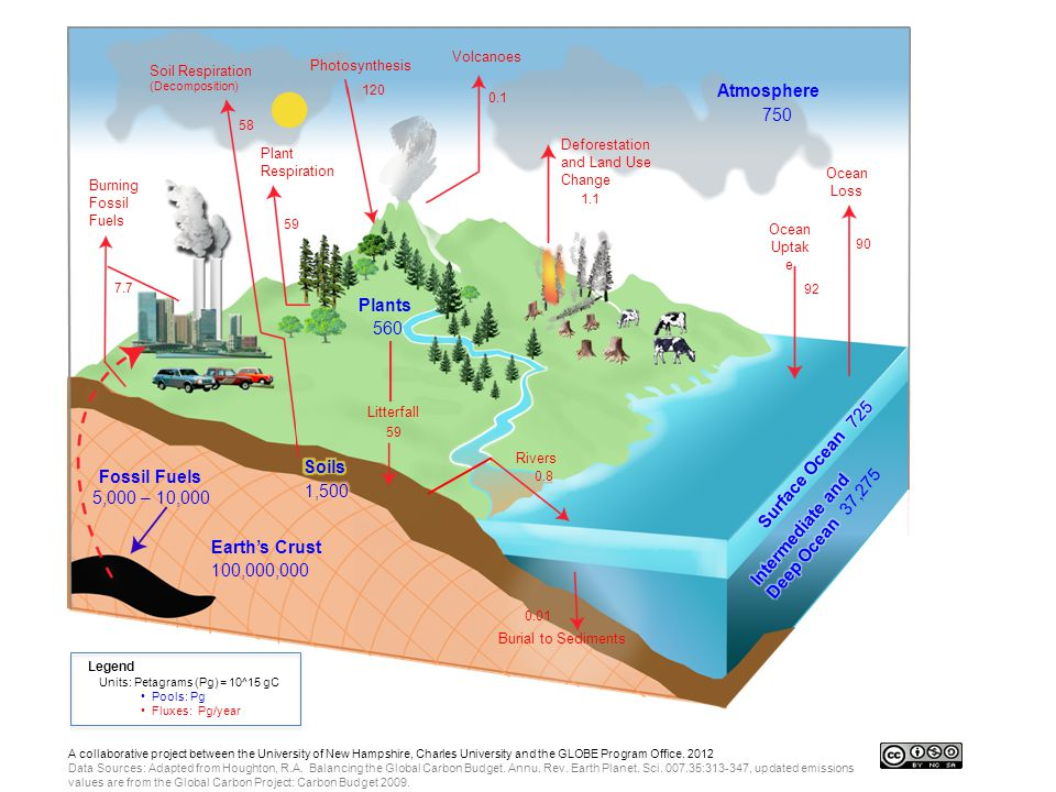 Soil Respiration (Decomposition) Photosynthesis Burning Fossil Fuels 7.7 Plant Respiration 59 120 Volcanoes 0.1 Plants 560 Litterfall 59 Rivers 0.8 Deforestation and Land Use Change 1.1 Earth's Crust 100,000,000 Fossil Fuels 5,000 – 10,000 Atmosphere 750 Ocean Loss 90 Ocean Uptak e 92 Legend Units: Petagrams (Pg) = 10^15 gC Pools: Pg Fluxes: Pg/year 58 Burial to Sediments 0.01 A collaborative project between the University of New Hampshire, Charles University and the GLOBE Program Office.
