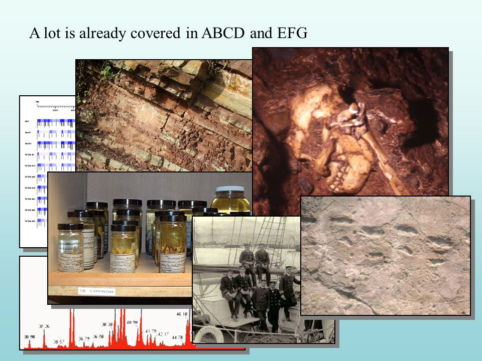 Entities identified for the Anthropology extension Although many of the elements related to anthropological specimens can be mapped into the ABCD and EFG schemas, there are elements specific to the domain and others that overlap with archaeology, art and social history.