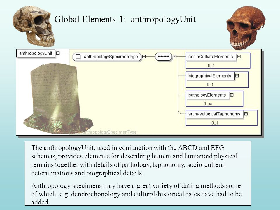 Global Elements 1: anthropologyUnit The anthropologyUnit, used in conjunction with the ABCD and EFG schemas, provides elements for describing human and humanoid physical remains together with details of pathology, taphonomy, socio-culteral determinations and biographical details.