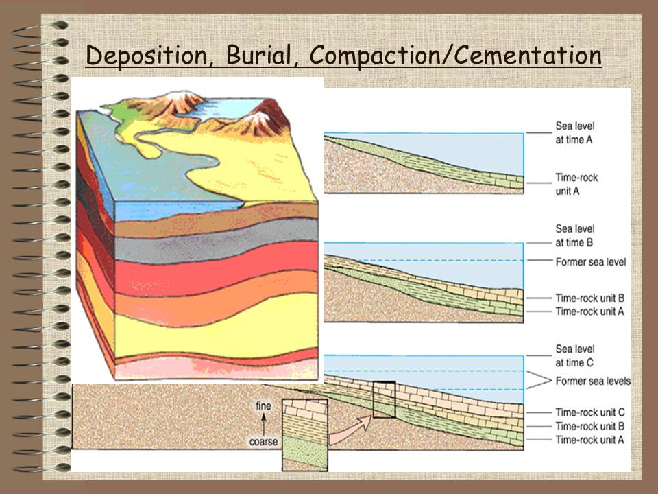 Sedimentary Rock Features Strata Fossils Trace Fossils (tracks, burrows) Ripple marks (currents) Mud cracks Graded bedding (storm deposits) Cross-bedding (tilted dep.