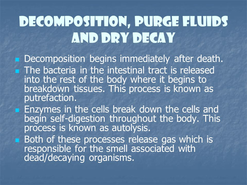 Decomposition, Purge Fluids and dry decay Decomposition begins immediately after death. The bacteria in the intestinal tract is released into the rest