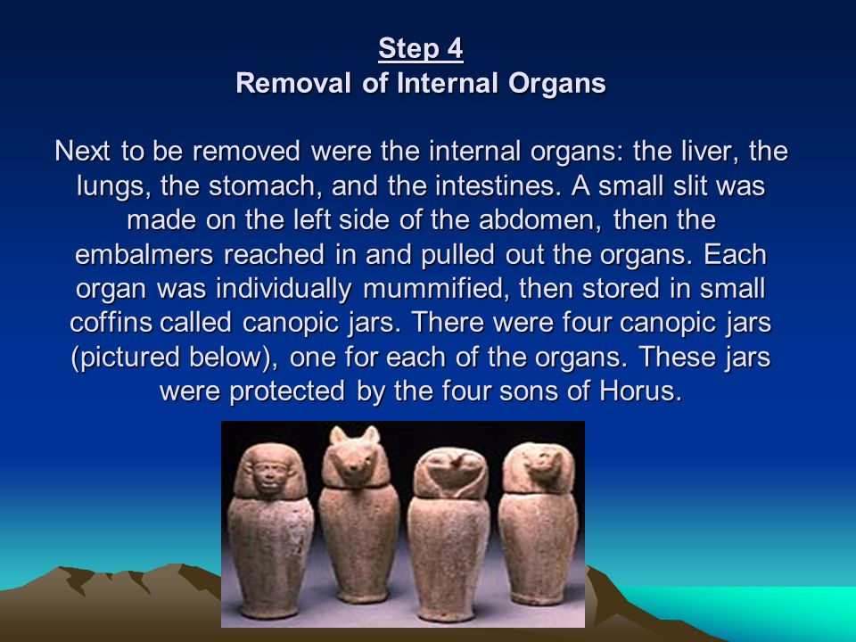 Step 4 Removal of Internal Organs Next to be removed were the internal organs: the liver, the lungs, the stomach, and the intestines.