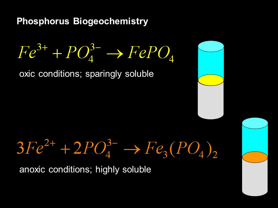 oxic conditions; sparingly soluble anoxic conditions; highly soluble Phosphorus Biogeochemistry