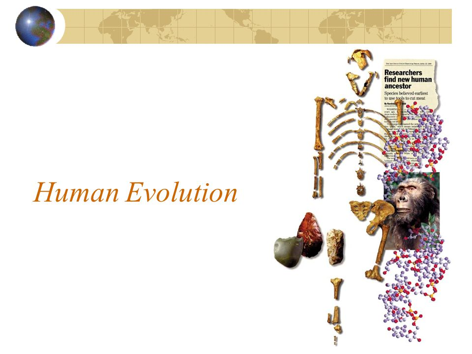 Background Info Paleanthropologist: Scientist who studies fossil evidence of human evolution Hominid: Humans and immediate ancestors Scientists study clues from hominids to construct what we know about human evolution