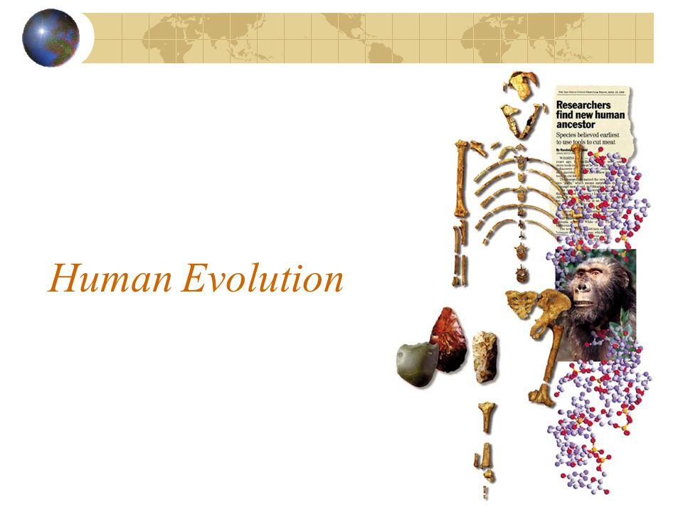 Homo erectus 1891 - Eugene Dubois discovers H.