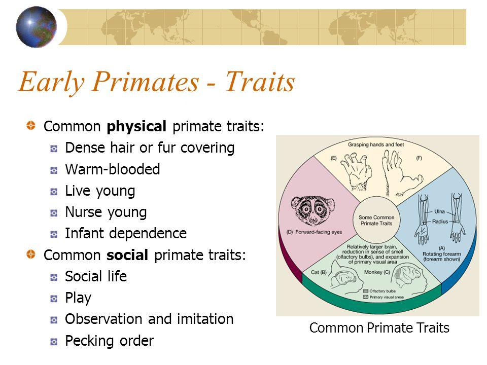 Primate Family Tree Crown lemur Orangutan