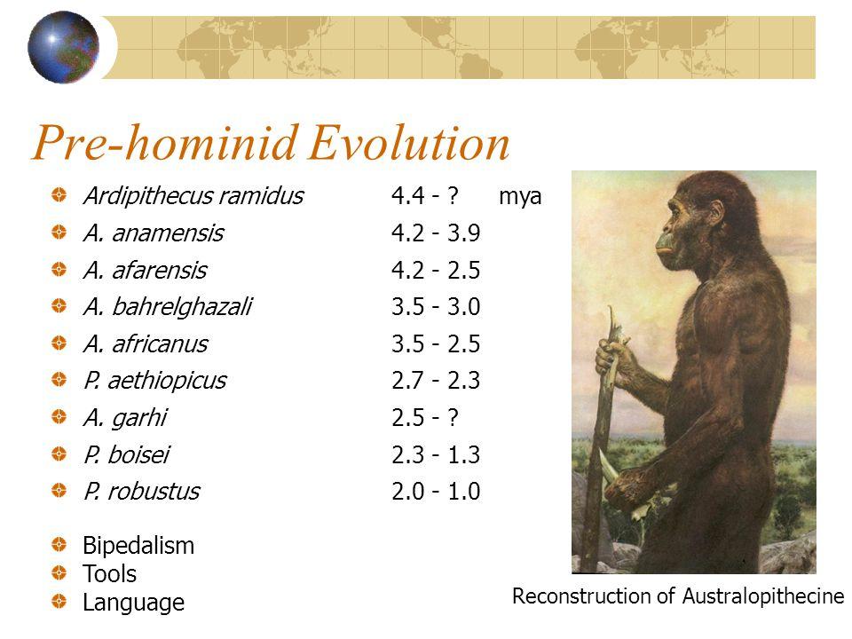 Cro-Magnon Man Cro-Magnon humans 35,000 years B.P.