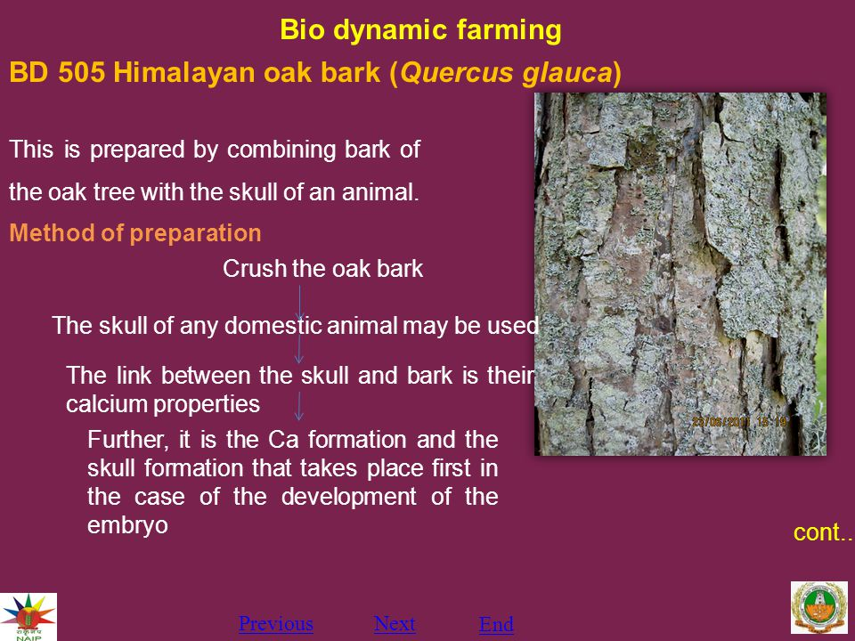 Bio dynamic farming PreviousNext End BD 505 Himalayan oak bark (Quercus glauca) This is prepared by combining bark of the oak tree with the skull of an animal.