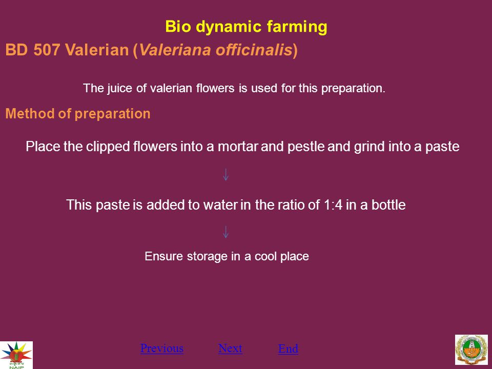 Bio dynamic farming PreviousNext End BD 507 Valerian (Valeriana officinalis) The juice of valerian flowers is used for this preparation.
