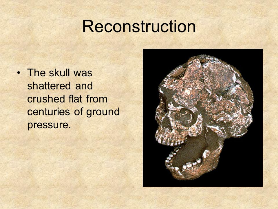 Reconstruction The skull was shattered and crushed flat from centuries of ground pressure.