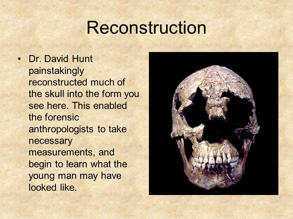 Reconstruction Dr. David Hunt painstakingly reconstructed much of the skull into the form you see here. This enabled the forensic anthropologists to t