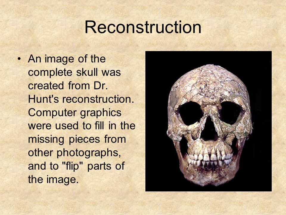 Reconstruction An image of the complete skull was created from Dr.