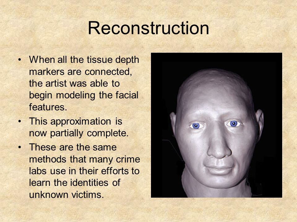 Reconstruction When all the tissue depth markers are connected, the artist was able to begin modeling the facial features.