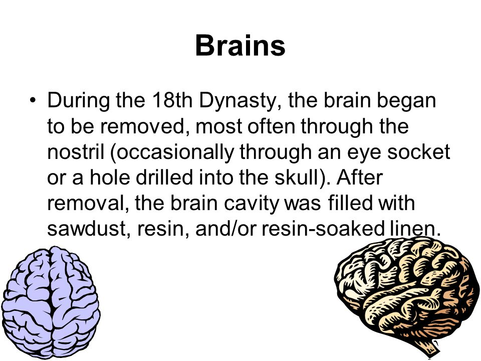 Brains During the 18th Dynasty, the brain began to be removed, most often through the nostril (occasionally through an eye socket or a hole drilled into the skull).