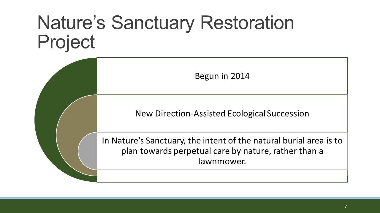 Nature's Sanctuary Restoration Project 8