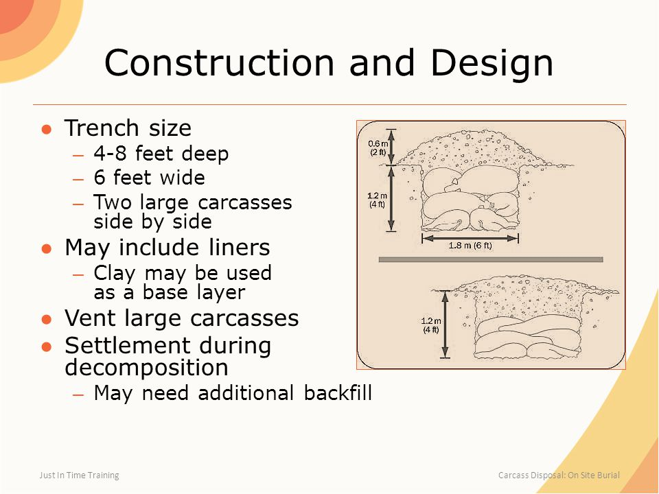 Construction and Design ●Trench size – 4-8 feet deep – 6 feet wide – Two large carcasses side by side ●May include liners – Clay may be used as a base layer ●Vent large carcasses ●Settlement during decomposition – May need additional backfill Just In Time Training Carcass Disposal: On Site Burial