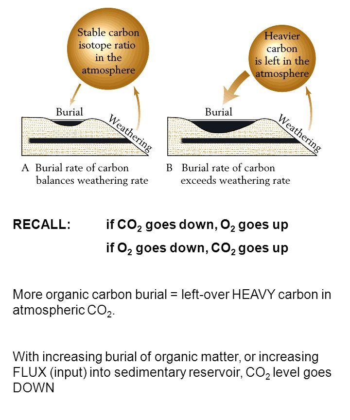RECALL: if CO 2 goes down, O 2 goes up if O 2 goes down, CO 2 goes up More organic carbon burial = left-over HEAVY carbon in atmospheric CO 2.