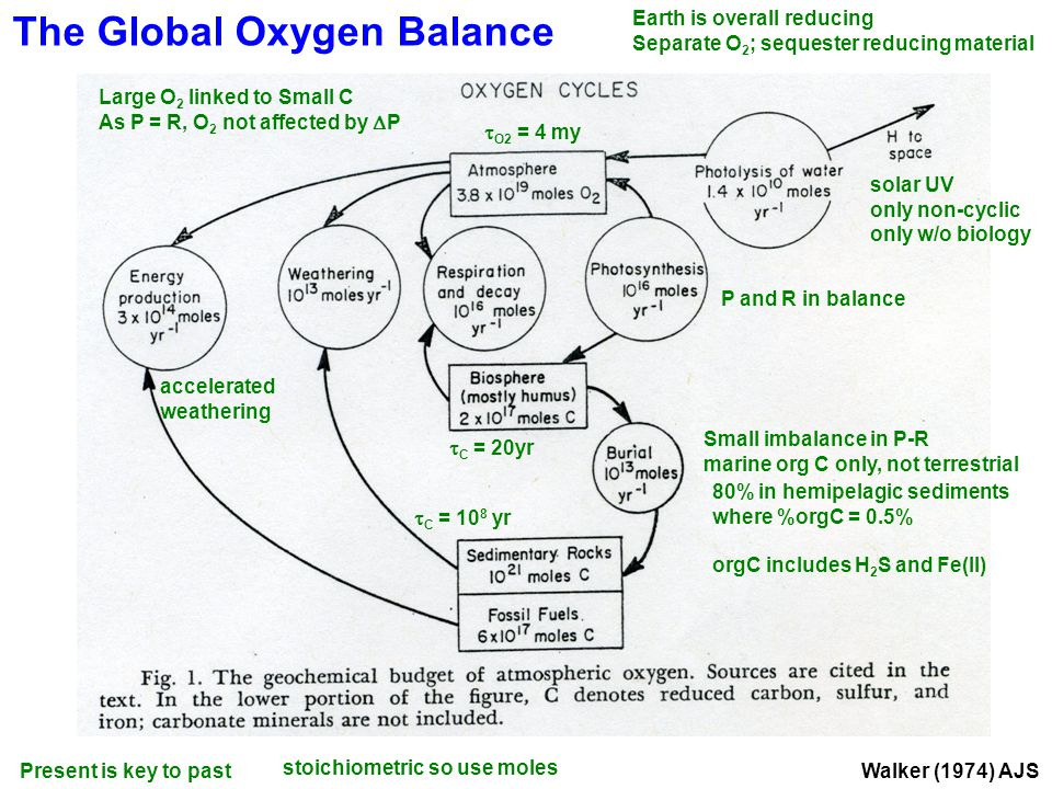 Walker (1974) AJS The Global Oxygen Balance solar UV only non-cyclic only w/o biology Earth is overall reducing Separate O 2 ; sequester reducing material Present is key to past P and R in balance Small imbalance in P-R marine org C only, not terrestrial 80% in hemipelagic sediments where %orgC = 0.5% orgC includes H 2 S and Fe(II) stoichiometric so use moles Large O 2 linked to Small C As P = R, O 2 not affected by  P accelerated weathering  C = 20yr  O2 = 4 my  C = 10 8 yr