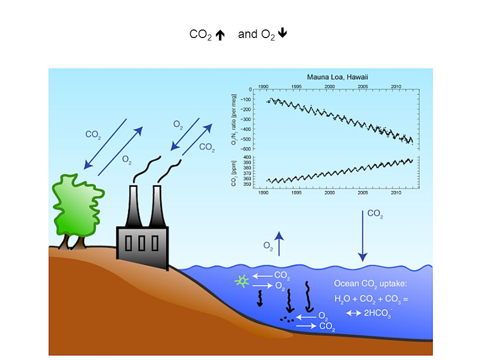 CO 2  and O 2 