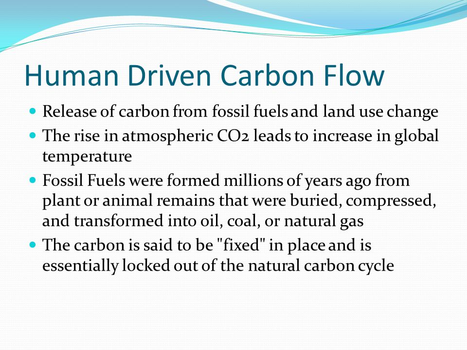 Human Driven Carbon Flow Release of carbon from fossil fuels and land use change The rise in atmospheric CO2 leads to increase in global temperature Fossil Fuels were formed millions of years ago from plant or animal remains that were buried, compressed, and transformed into oil, coal, or natural gas The carbon is said to be fixed in place and is essentially locked out of the natural carbon cycle