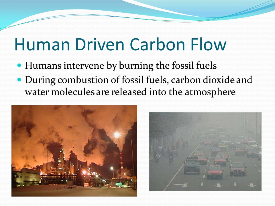 Human Driven Carbon Flow Humans intervene by burning the fossil fuels During combustion of fossil fuels, carbon dioxide and water molecules are released into the atmosphere