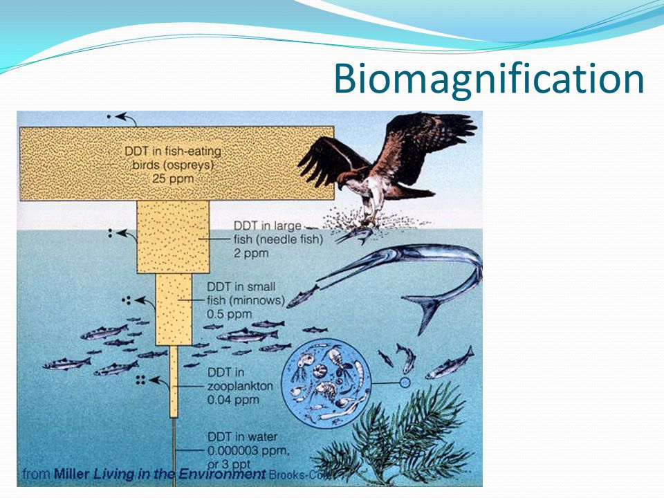 Populations of many predatory and fish-eating birds in the United States declined in the 1950s and 60s The causes of these population declines were traced to pollution of aquatic habitats by residues of DDT DDT is a pesticide that was used to control crop pests after World War II