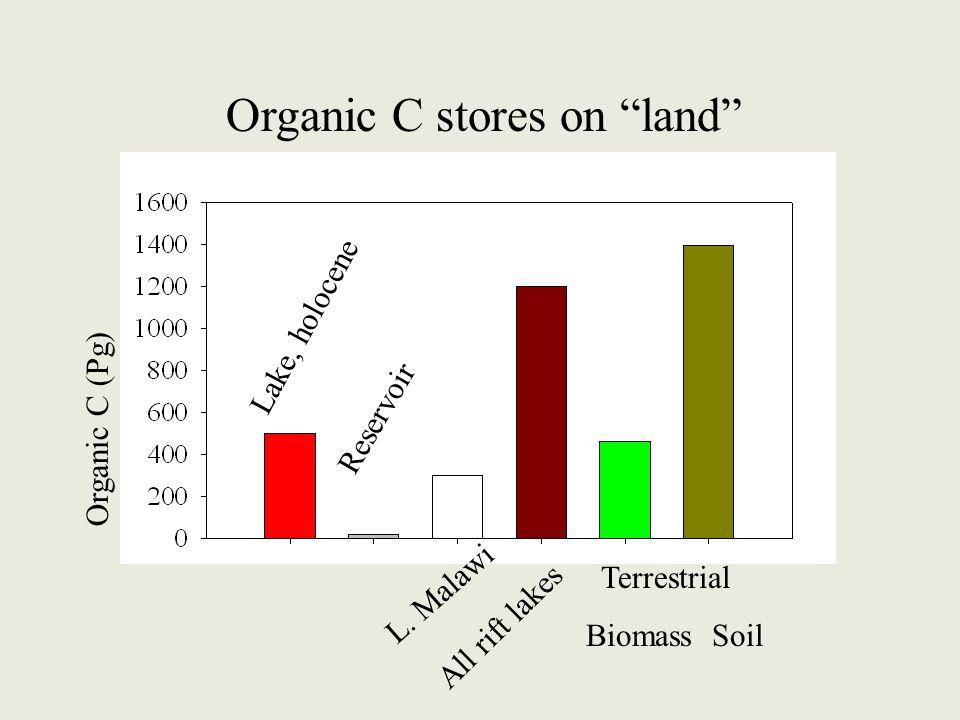 "Lake, holocene Reservoir L. Malawi All rift lakes Terrestrial Biomass Soil Organic C stores on ""land"" Organic C (Pg)"