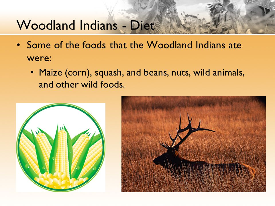 Woodland Indians - Diet Some of the foods that the Woodland Indians ate were: Maize (corn), squash, and beans, nuts, wild animals, and other wild foods.