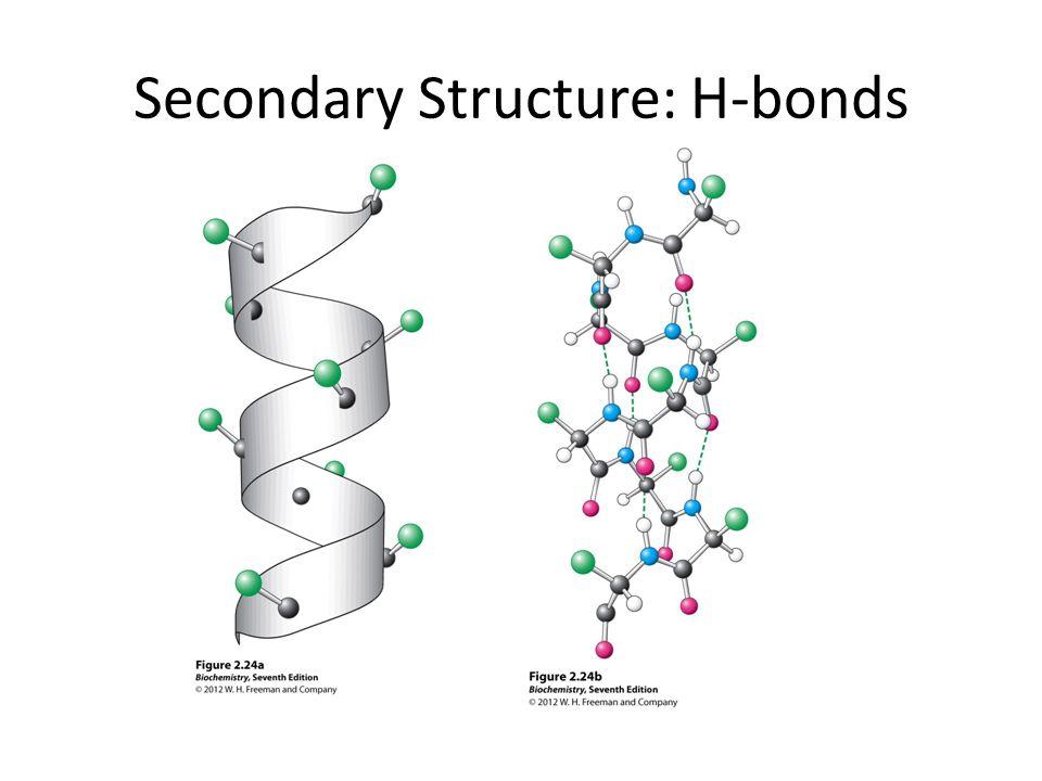 Secondary Structure: H-bonds