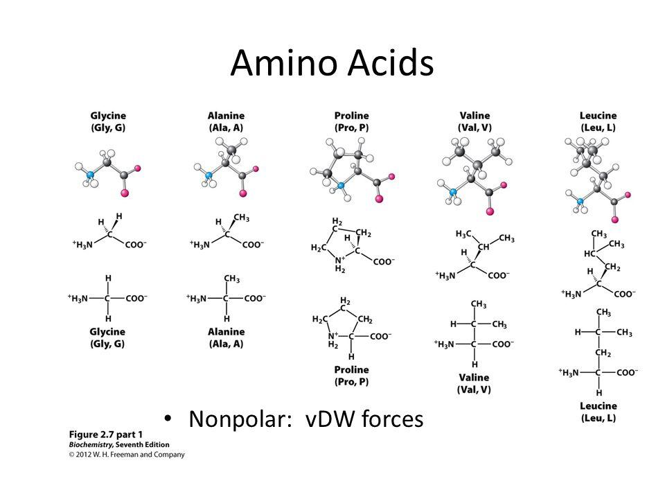 Amino Acids Nonpolar: vDW forces