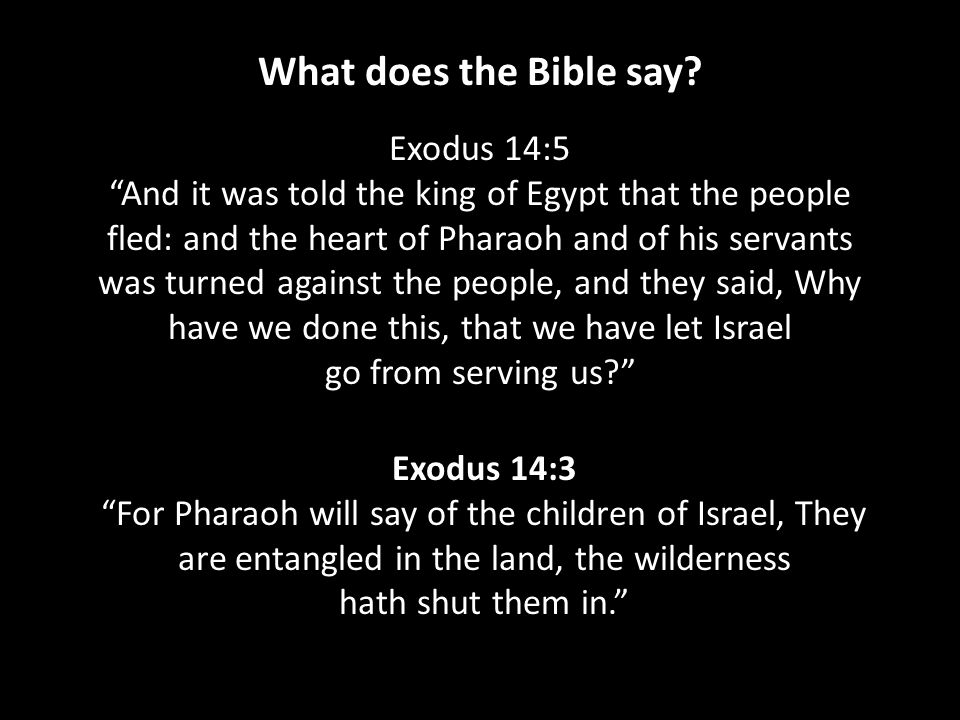 Exodus 14:5 And it was told the king of Egypt that the people fled: and the heart of Pharaoh and of his servants was turned against the people, and they said, Why have we done this, that we have let Israel go from serving us Exodus 14:3 For Pharaoh will say of the children of Israel, They are entangled in the land, the wilderness hath shut them in. What does the Bible say