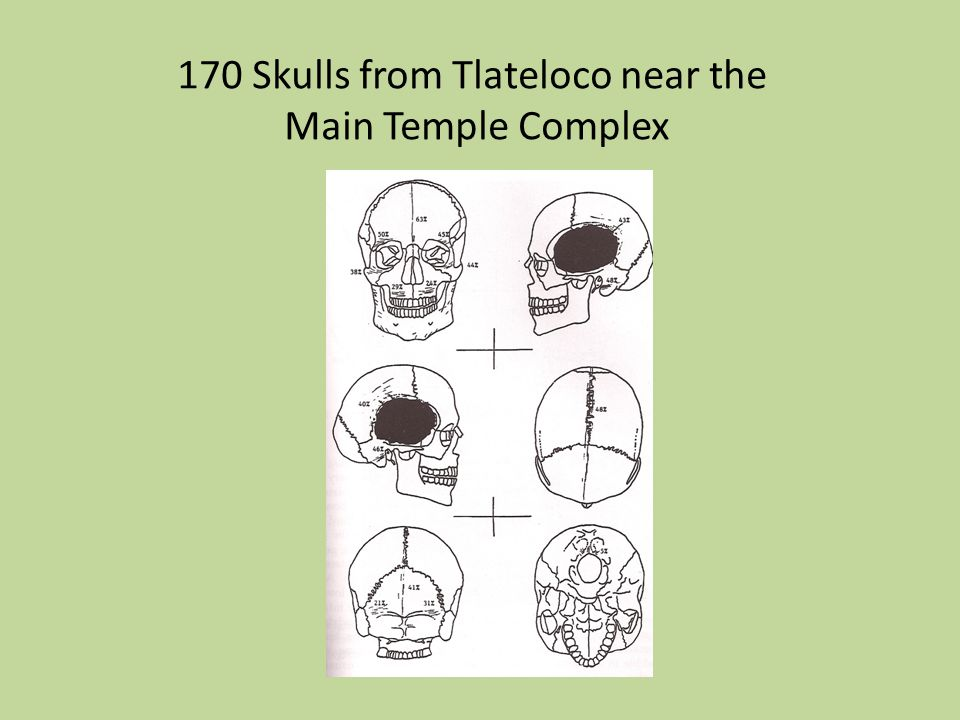 170 Skulls from Tlateloco near the Main Temple Complex