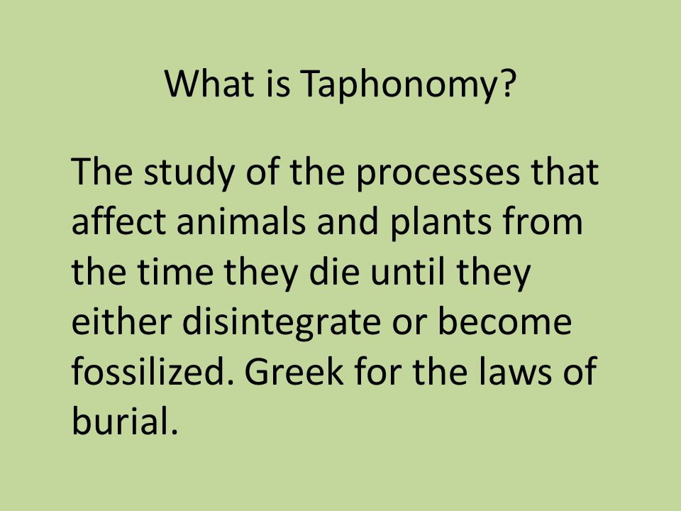 What is Taphonomy.