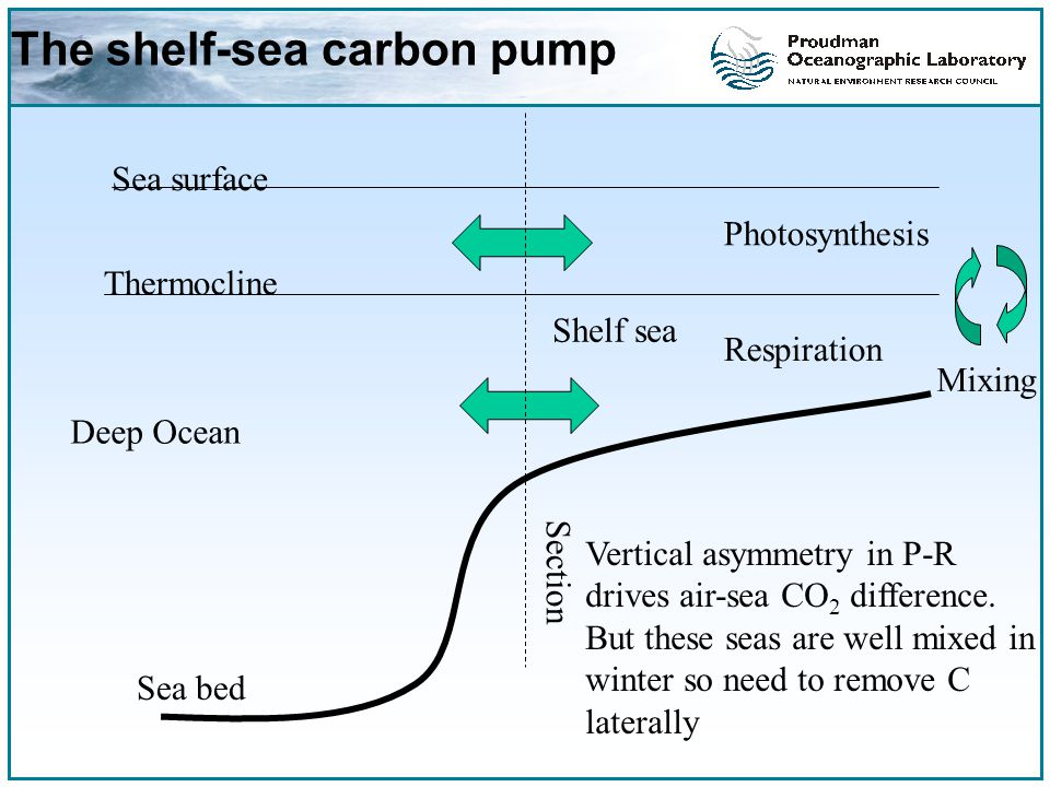 The shelf-sea carbon pump Sea surface Thermocline Sea bed Section Deep Ocean Shelf sea Vertical asymmetry in P-R drives air-sea CO 2 difference.