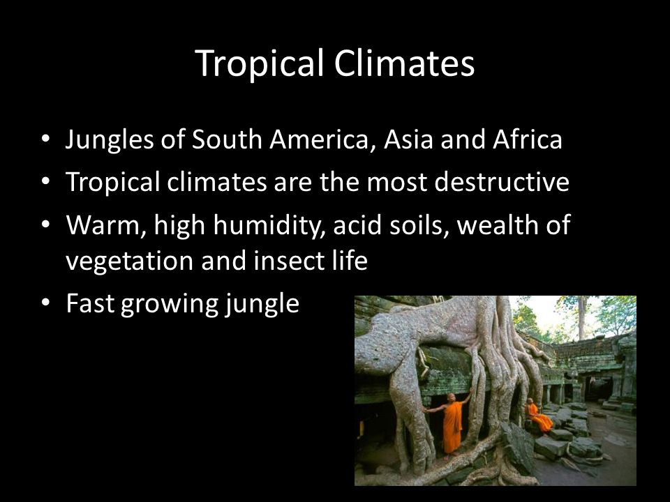 Tropical Climates Jungles of South America, Asia and Africa Tropical climates are the most destructive Warm, high humidity, acid soils, wealth of vegetation and insect life Fast growing jungle