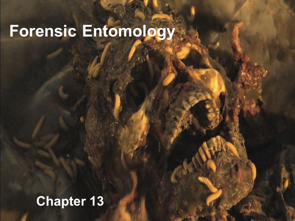 Chapter 13 Forensic Entomology