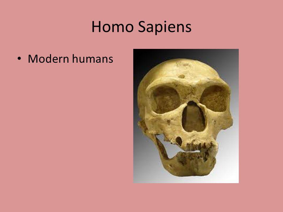 Homo Sapiens Modern humans