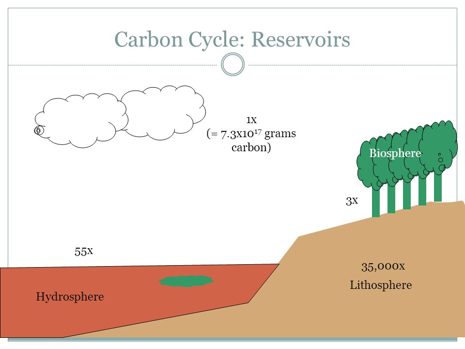 Carbon Cycle: Reservoirs Atmosphere Hydrosphere Lithosphere Biosphere 1x (= 7.3x10 17 grams carbon) 3x 55x 35,000x