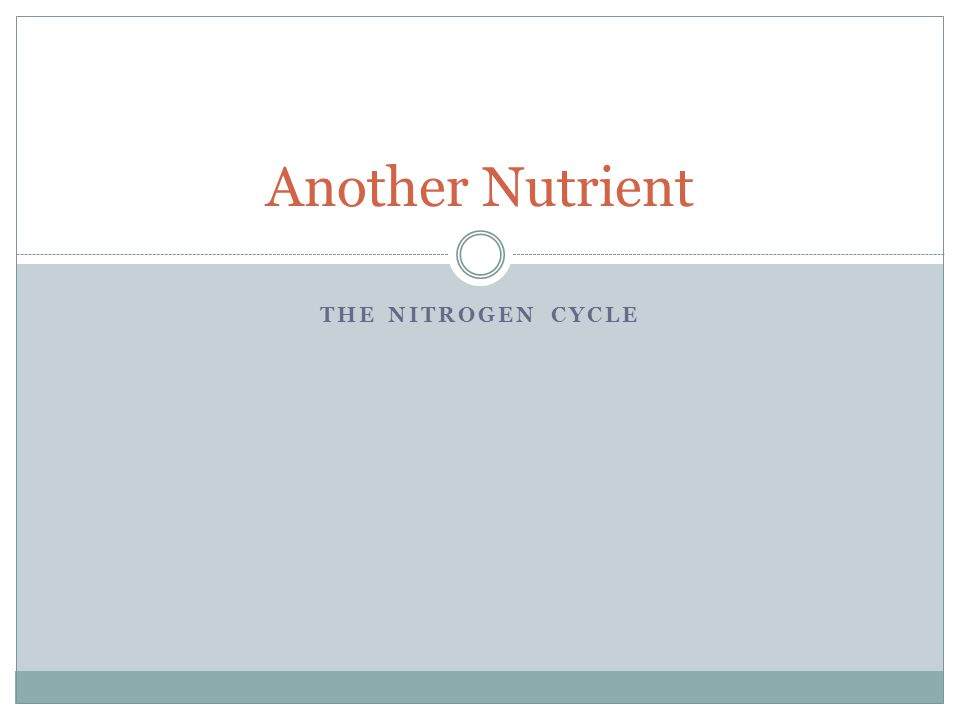 THE NITROGEN CYCLE Another Nutrient