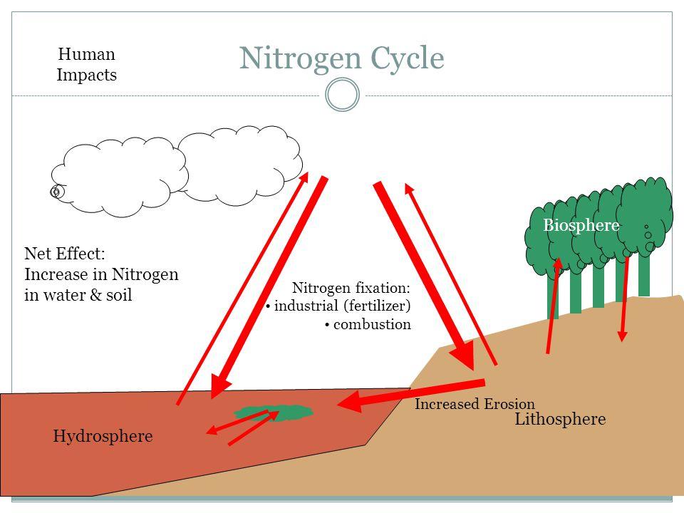 Nitrogen Cycle Atmosphere Hydrosphere Lithosphere Biosphere Nitrogen fixation: industrial (fertilizer) combustion Increased Erosion Human Impacts Net Effect: Increase in Nitrogen in water & soil