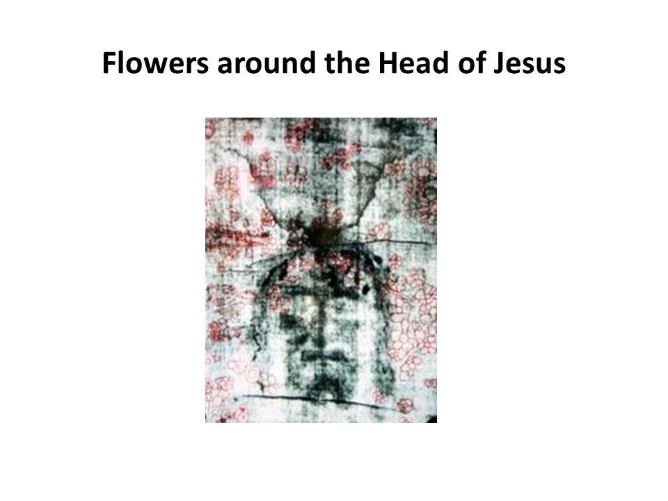 Flowers around the Head of Jesus