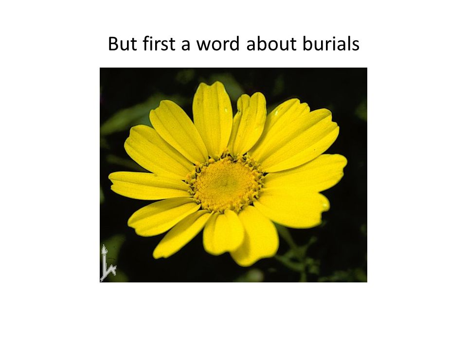 But first a word about burials