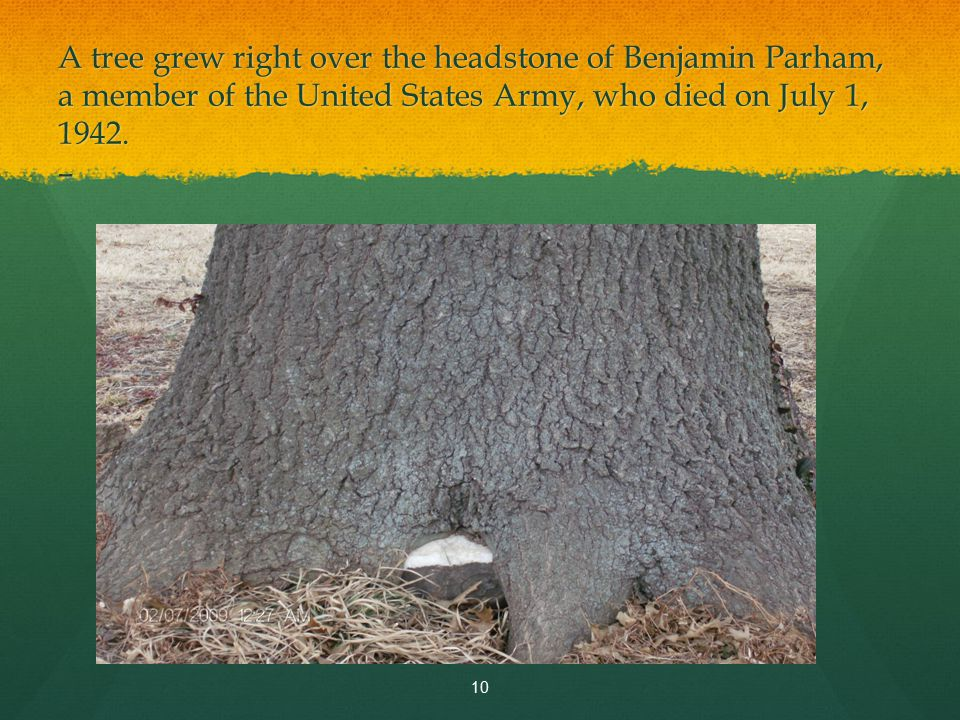 A tree grew right over the headstone of Benjamin Parham, a member of the United States Army, who died on July 1, 1942.