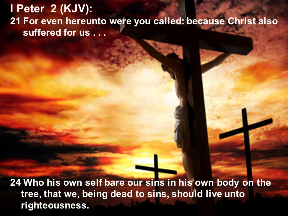 43 I Peter 2 (KJV): 21For even hereunto were you called: because Christ also suffered for us...