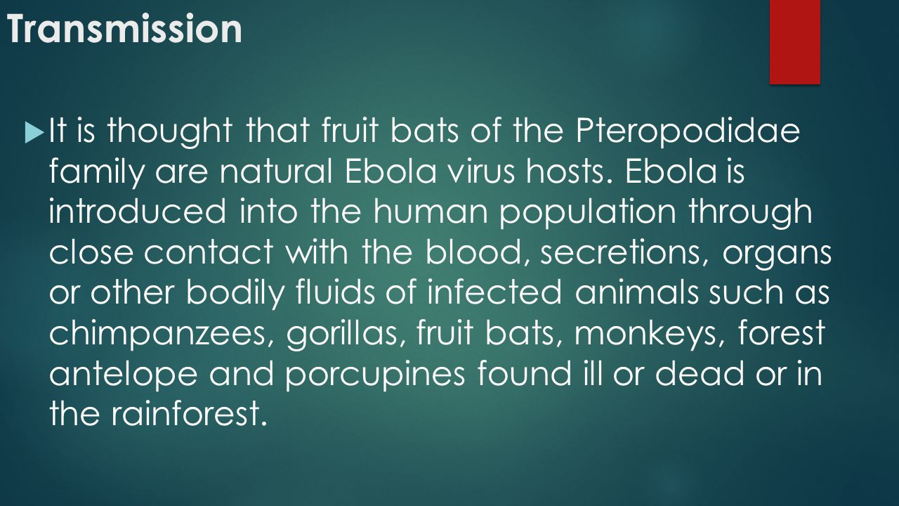 Transmission  It is thought that fruit bats of the Pteropodidae family are natural Ebola virus hosts.