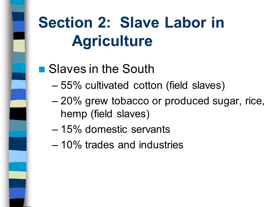 Section 2: Slave Labor in Agriculture Slaves in the South –55% cultivated cotton (field slaves) –20% grew tobacco or produced sugar, rice, hemp (field