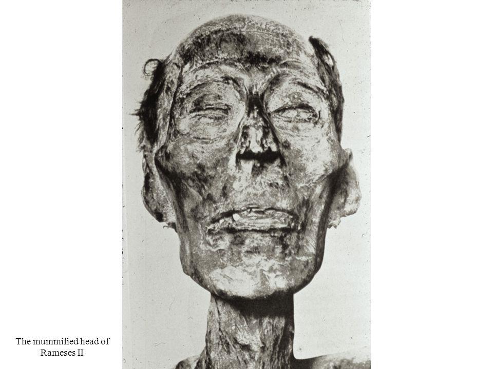 The mummified head of Rameses II