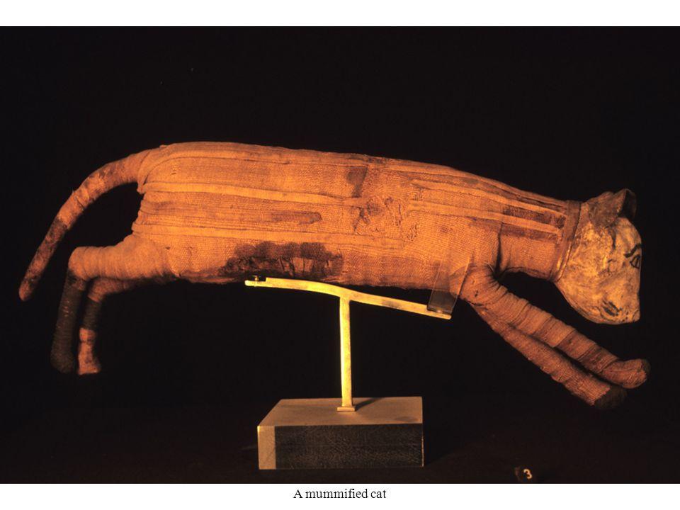 A mummified cat