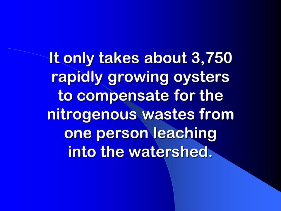 It only takes about 3,750 rapidly growing oysters to compensate for the nitrogenous wastes from one person leaching into the watershed.